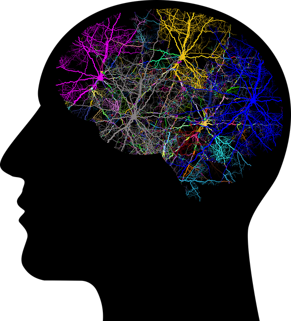 picture of colourful brain in silhouette